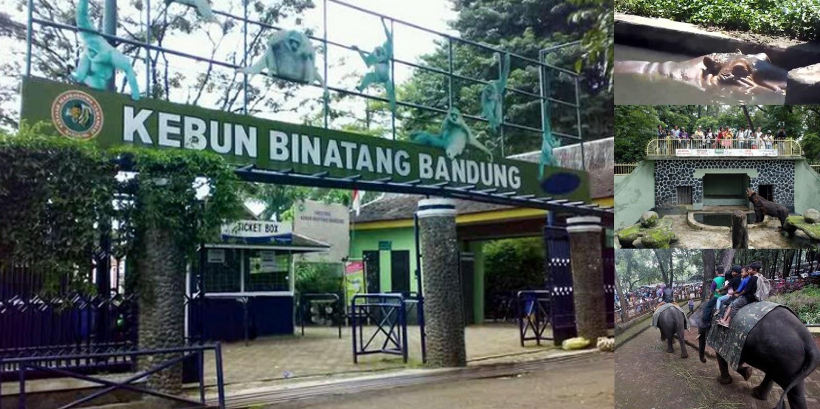 Kebun Binatang Bandung Rekreasi Keluarga Lebih Bermakna di ...
