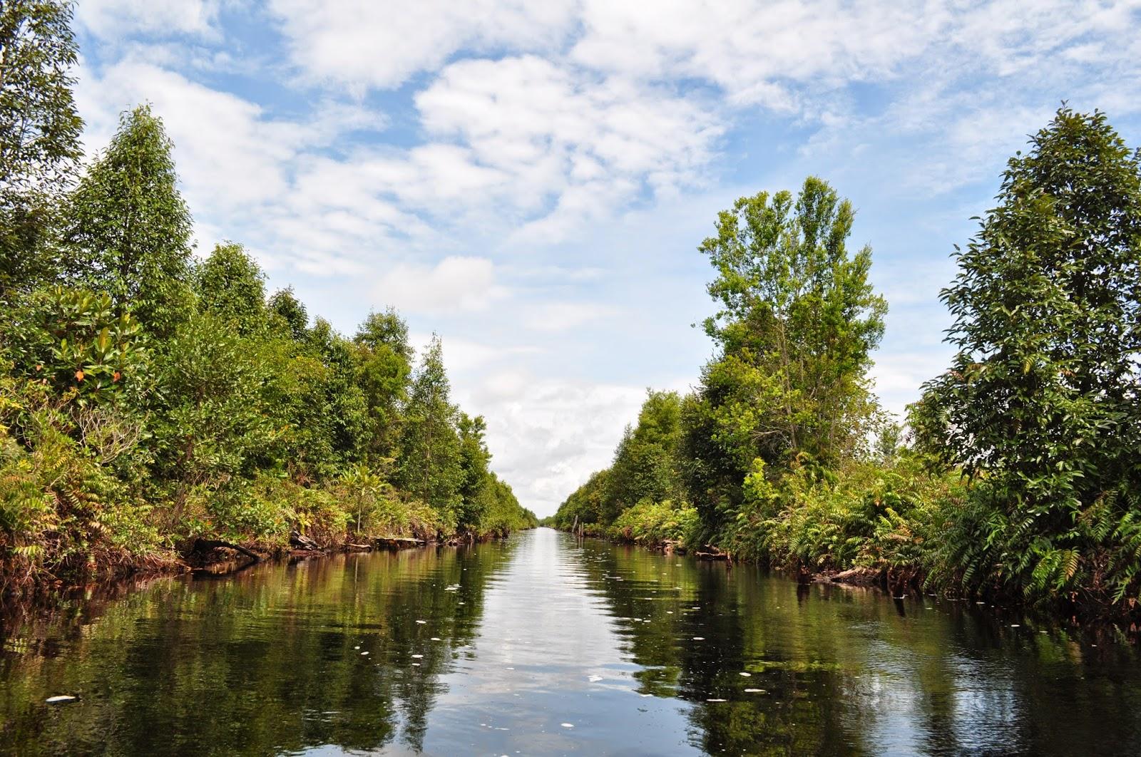 Taman Nasional Sebangau Sensasi Menelusuri Hutan Gambut di Kalimantan Tengah
