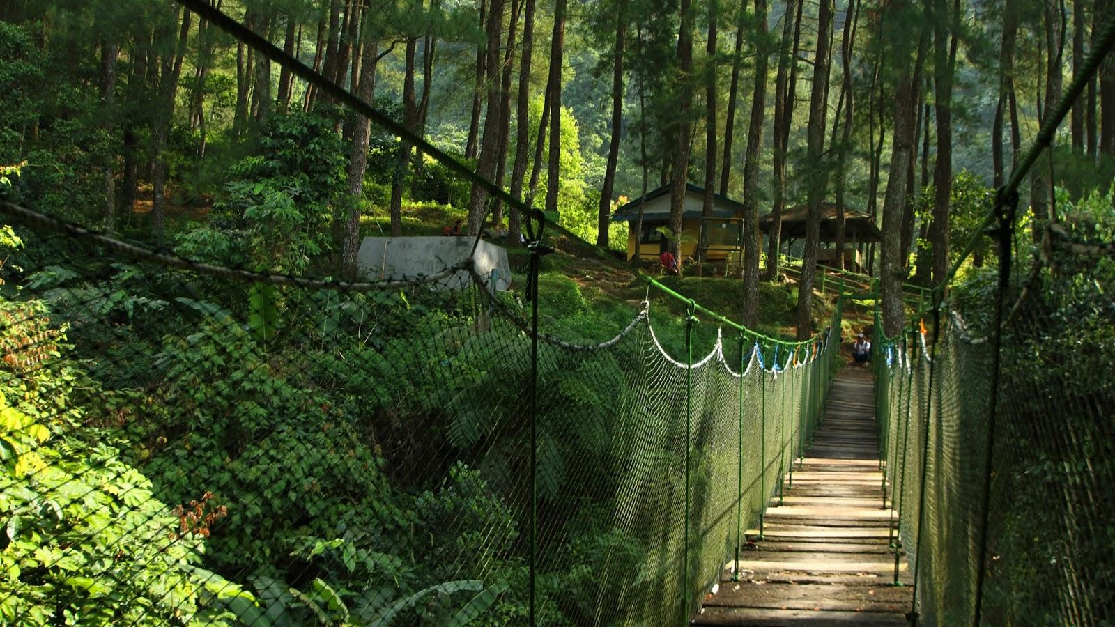 Suaka Elang Wisata Alam dan Edukasi Menarik di Jawa Barat ...