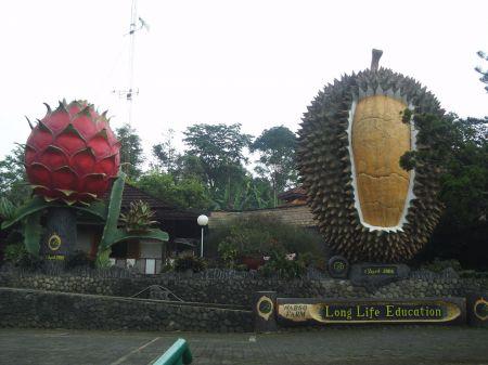 Warso Farm Jawa Barat