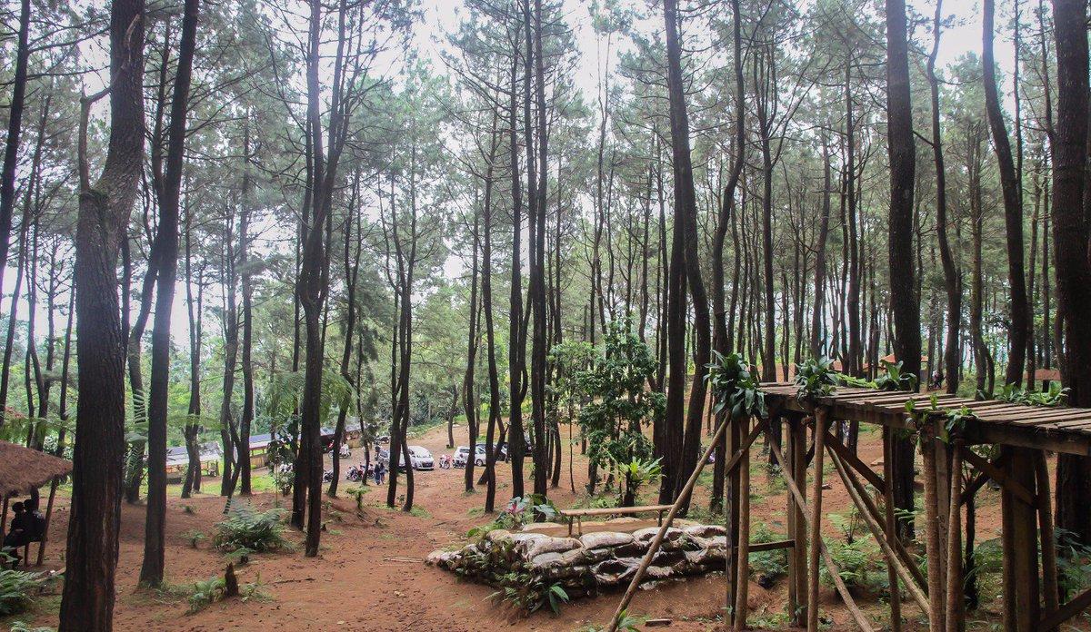 Hutan Pinus Pasir Langlang Wisata Asri Di Jawa Barat Jawa Barat