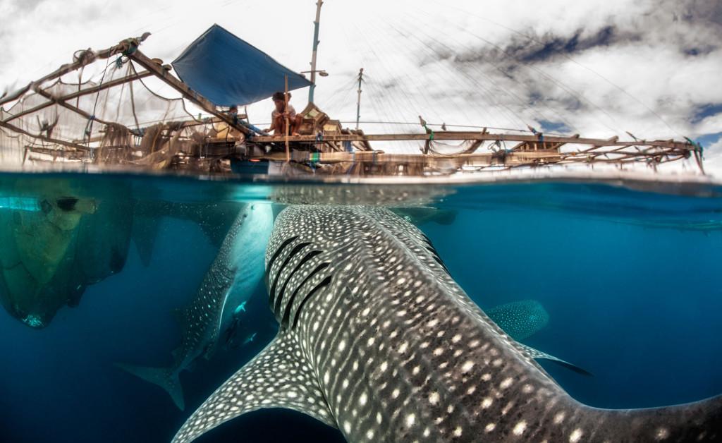Taman Nasional Teluk Cendrawasih yang Mengagumkan - Papua