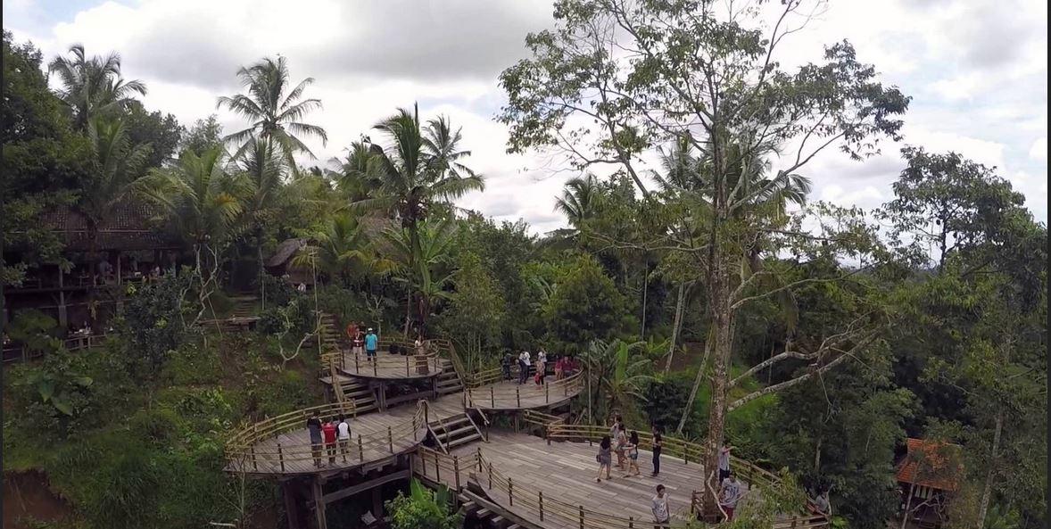 Bali Pulina Nikmatnya Kopi Luwak Dipadu Pemandangan Yang