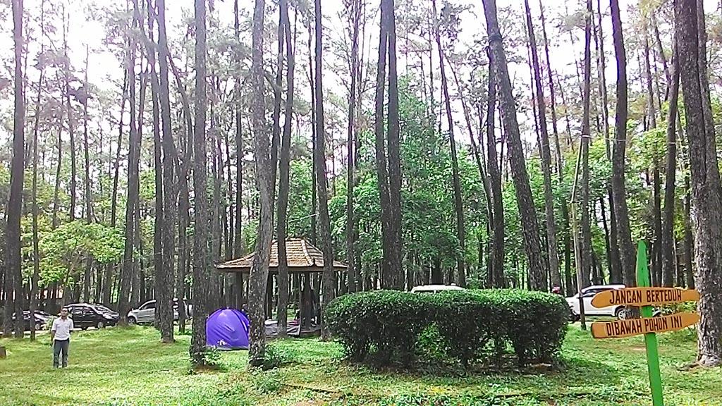 Image result for wisata alam hutan punti palembang