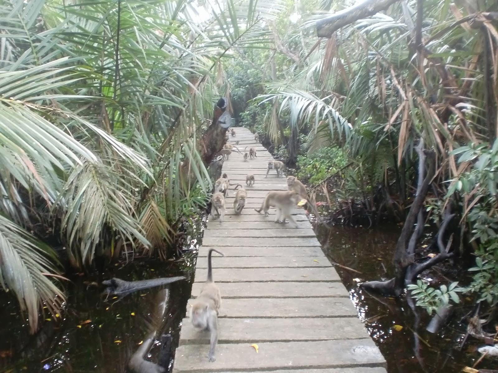 Pulau Kembang Pulau Berpenghuni Kera Kalimantan Selatan
