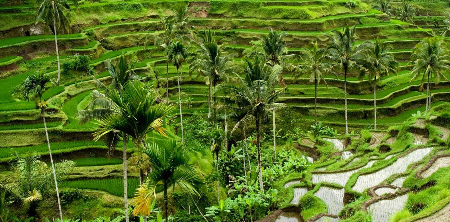 Wisata Ubud Eksotisnya Desa Seniman Di Bali Bali