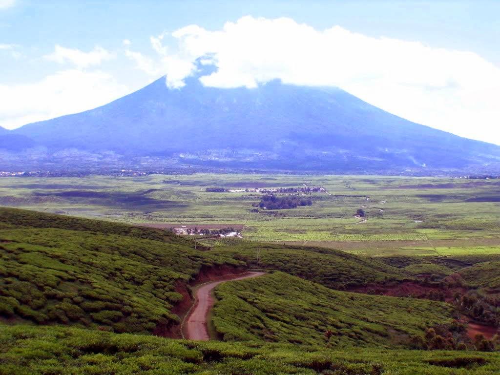 Perkebunan Teh Kayu Aro Kesegaran Udara Di Kaki Gunung Kerinci Jambi Jambi